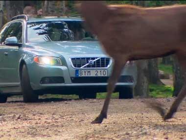 Volvo: nuevo sistema de seguridad