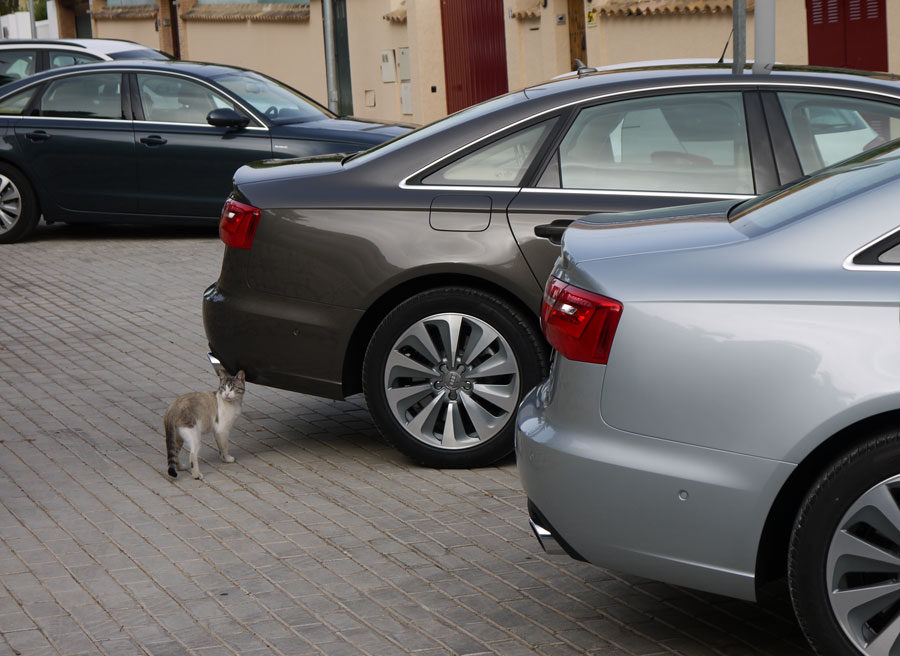 Audi A6 Hybrid, Rubén Fidalgo