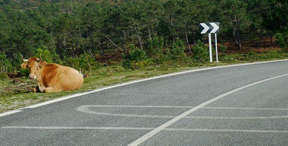 Cómo evitar los accidentes de tráfico con animales