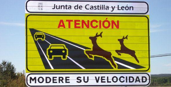 Los conductores, culpables en los accidentes con animales de caza