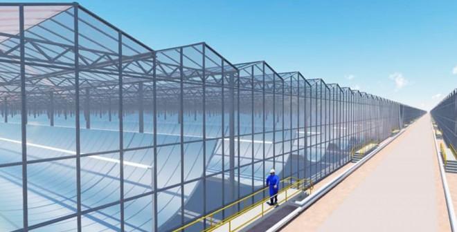 Planta solar para producir petróleo