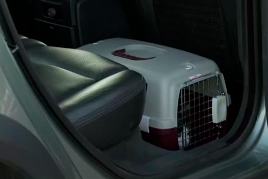 El transportín es el sistema de transporte animal idóneo para razas pequeñas y medianas.