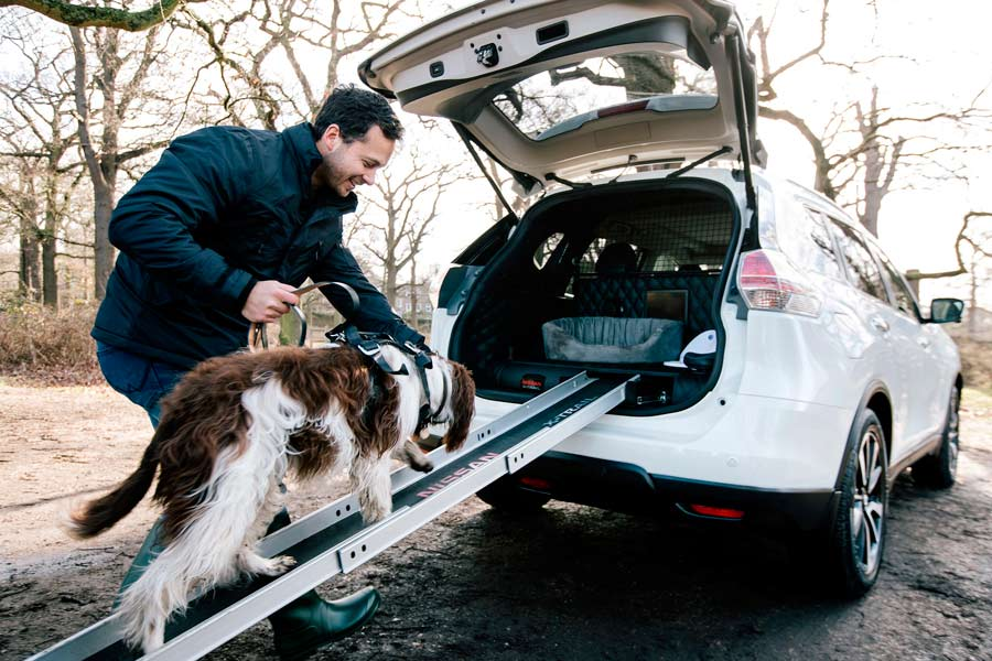 Las mascotas distraen al 25% de los conductores