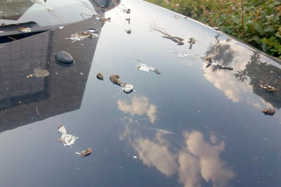 Tener el coche limpio y la pintura protegida con ceras evita que estas manchas sean imborrables.