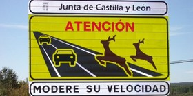Los conductores, culpables en los accidentes con animales de caza